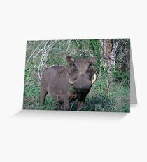 Wart Hog Greeting Card