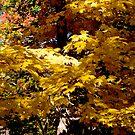 Fall Leaves by Jerry  Mumma
