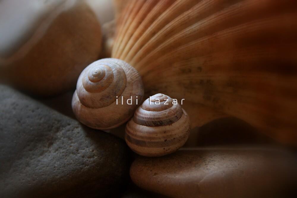 Shells & Rocks by i l d i    l a z a r