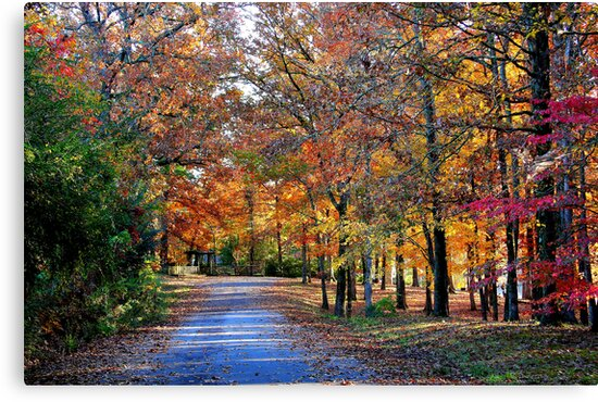 Fall Walk on Country Lane by Ginger  Barritt