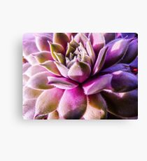 Pink and Green Macro Succulent Canvas Print