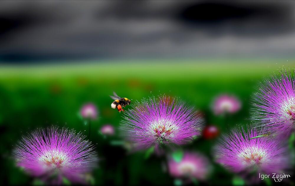 Meadow Life by Igor Zenin
