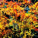 light in the leaves by Shannon Byous Ruddy
