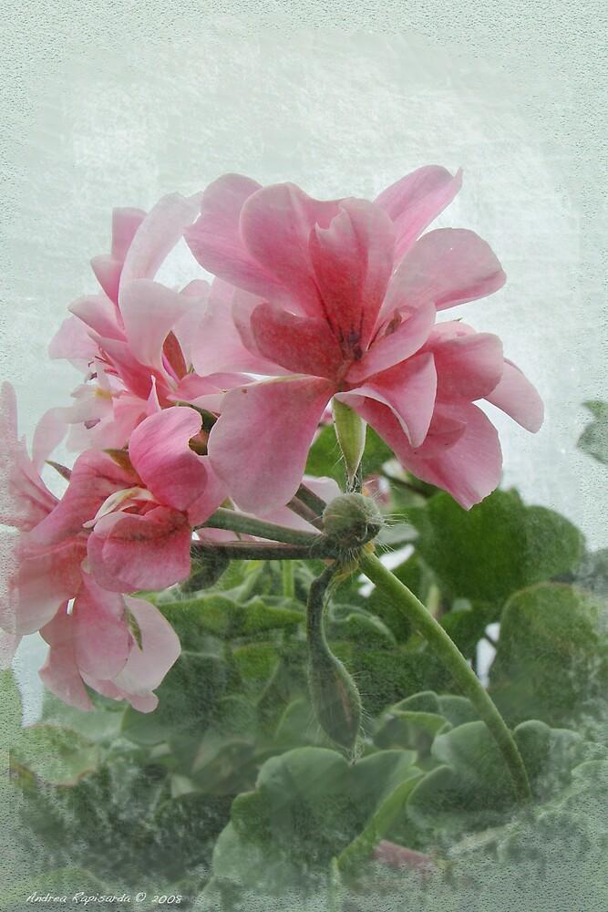 Flower old-style by Andrea Rapisarda