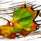 Autumn Leaf by glink