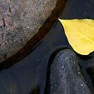 Falling in Calm Water by CarolM