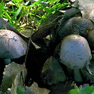 Mushroom Family by R&PChristianDesign &Photography