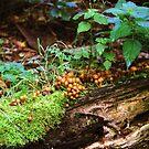 Fallen tree mini ecosystem by Debja