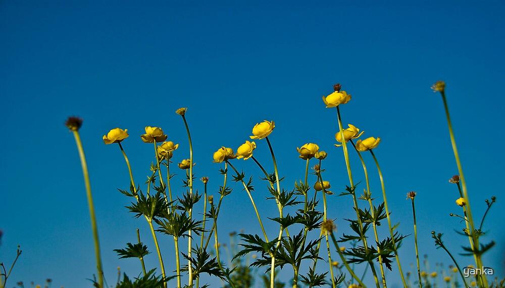 flowers by yanka