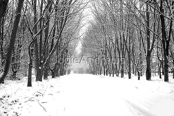 Snow falls by JodieAndrews