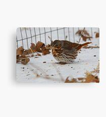 Fox Sparrow Canvas Print