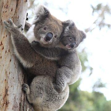 Koalas by SneaksPrints