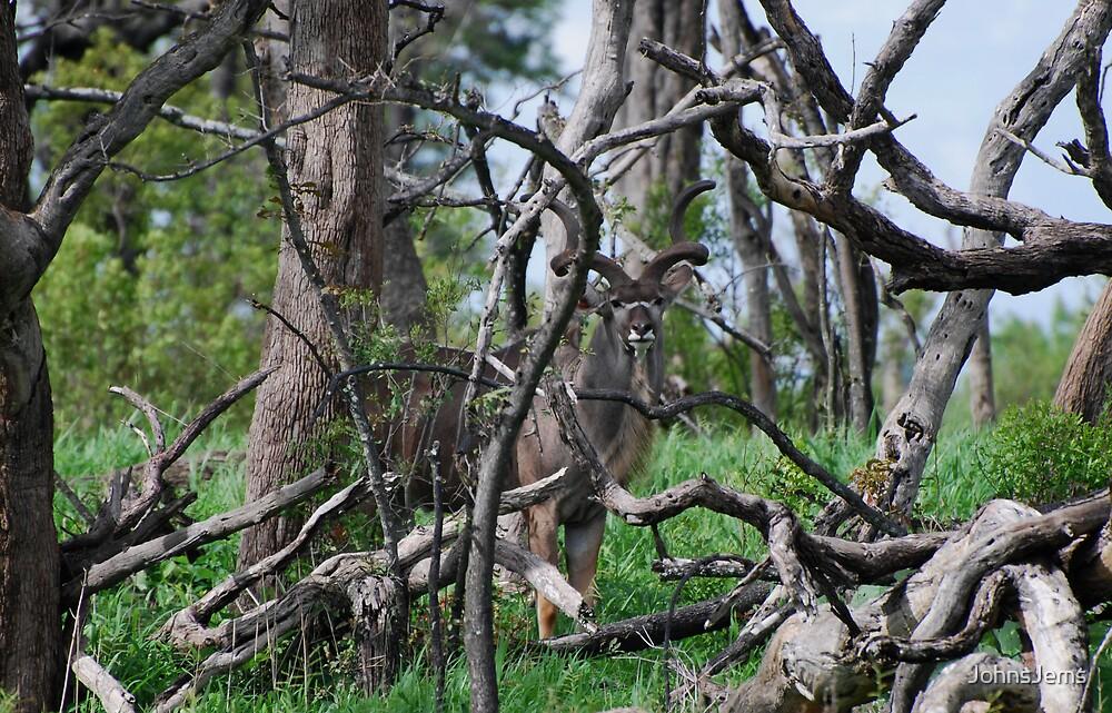 Kudu playing peek a boo by JohnsJems