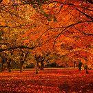 Autumnal by JEZ22