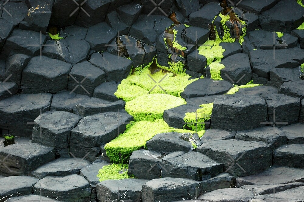Green algae spreading over grey basalt by SiobhanFraser