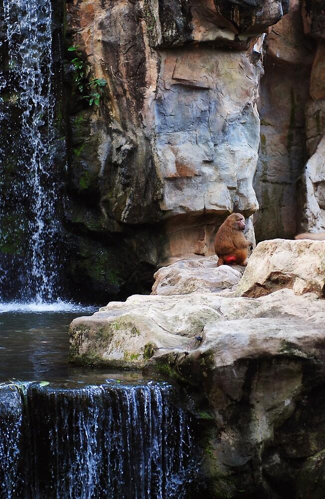 Baboon by daveloh