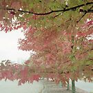 Fall by Gladys Saravia