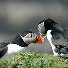 Puffins welcoming each other home by SiobhanFraser