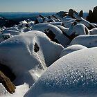 Winter Summit, Mt Ossa, Tasmania by tasadam