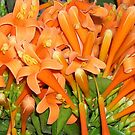 orange flowers by Gladys Saravia