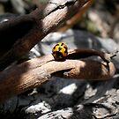 ladybird by Amanda le Bas de Plumetot