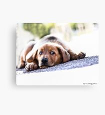 Puppet Dog Canvas Print