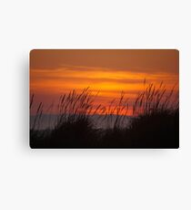 Sunset with reeds Canvas Print