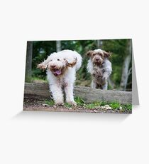 Italian Spinone Dogs in Action ~ Annabelle and Thane  Greeting Card