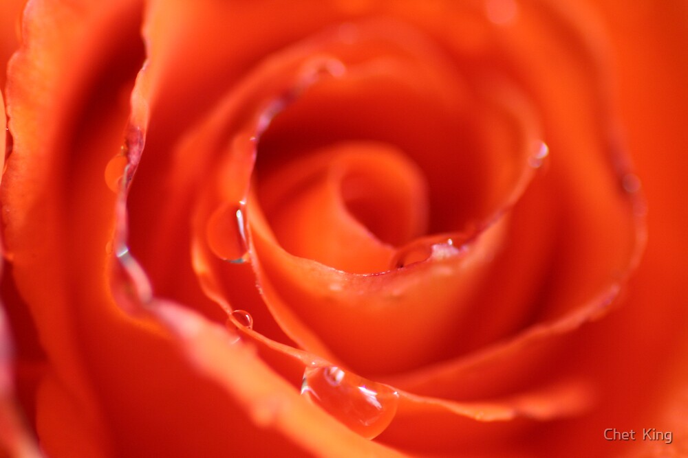 Orange Macro by Chet  King