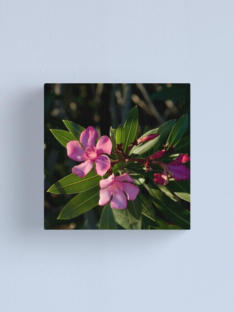 Alternate view of Pink Oleander Canvas Print