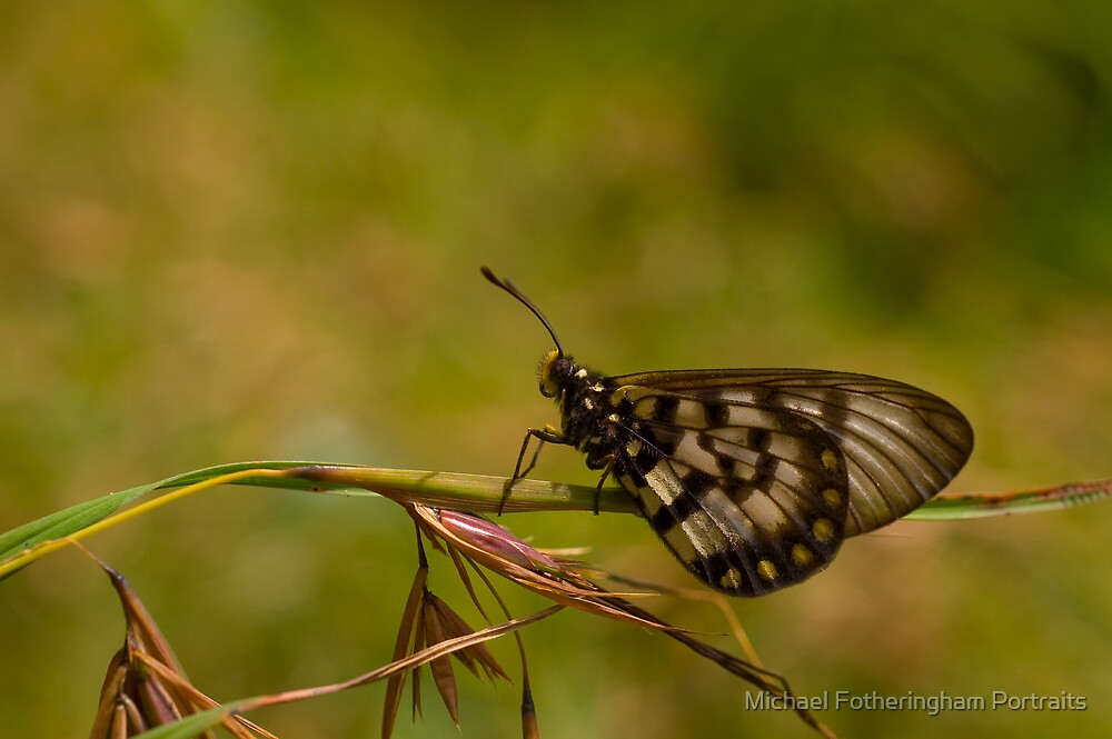 Butterfly by Michael Fotheringham Portraits