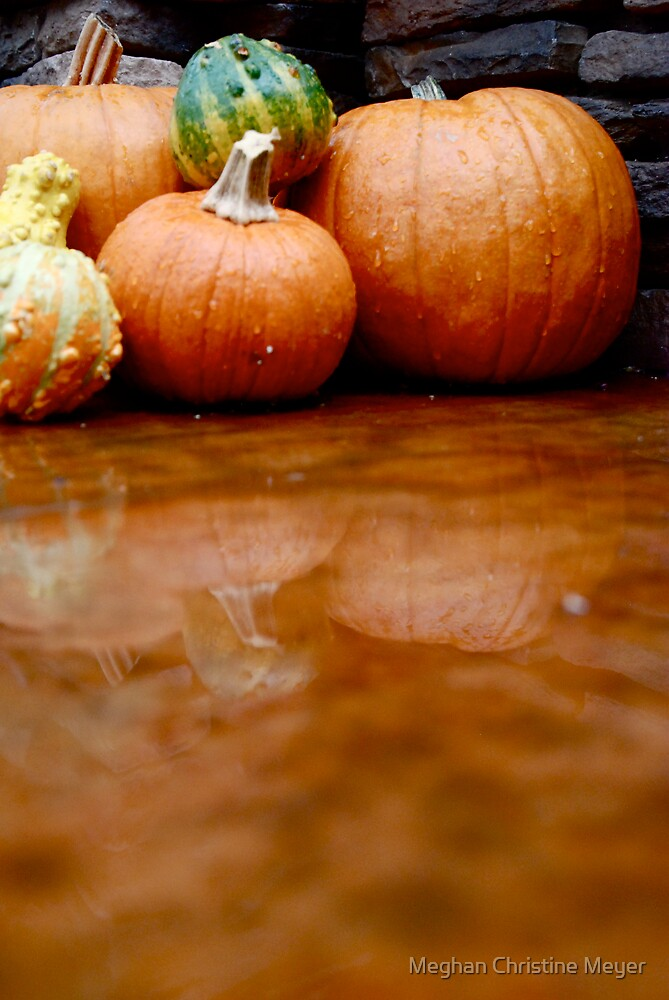 Pumpkins and Gourds by Meghan Christine Meyer