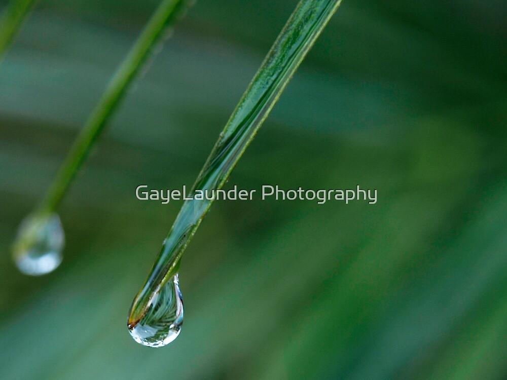Palm drop by GayeLaunder Photography