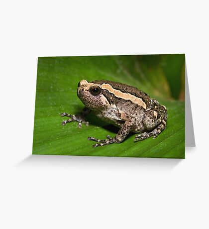 Asian Bullfrog Greeting Card
