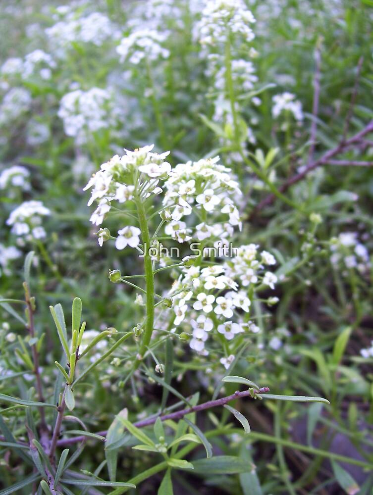 Mountain Flora.  (2) by John  Smith