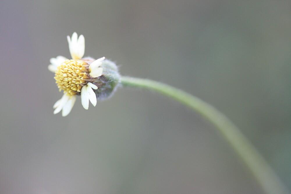 pinwheel go fly by malina