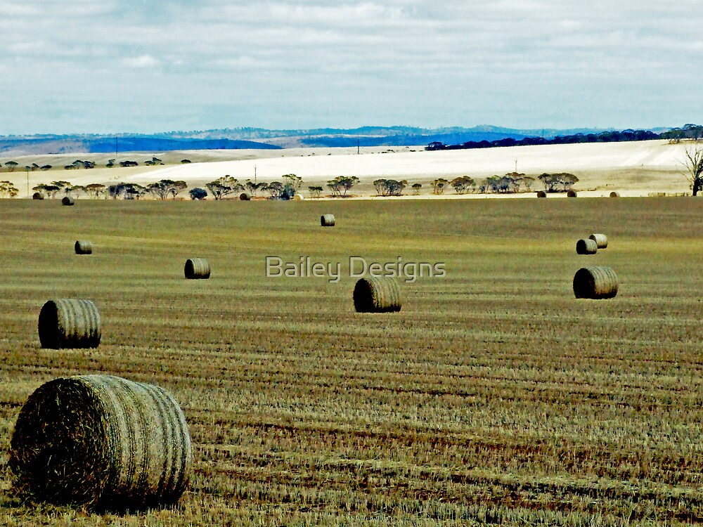 a field of hay by Bailey Designs