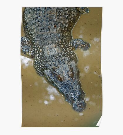 Thai Croc Poster