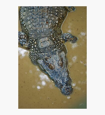 Thai Croc Photographic Print