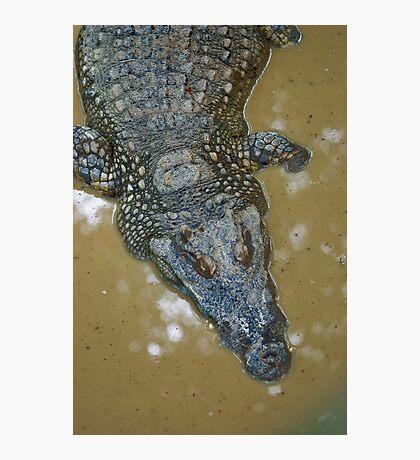 Thai Croc Photographic Print