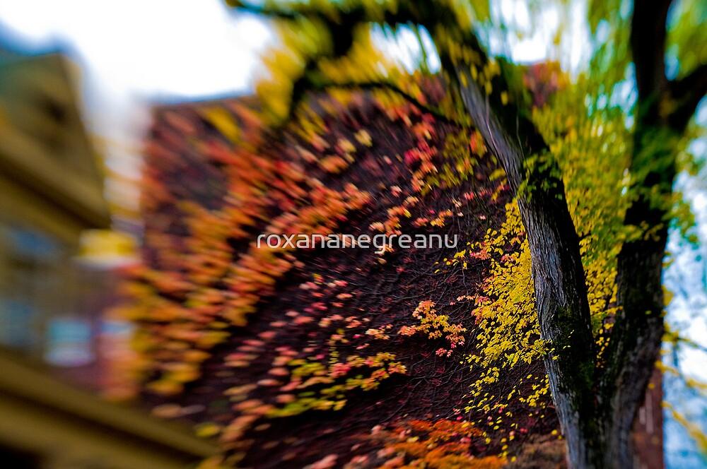 fall breeze by roxananegreanu