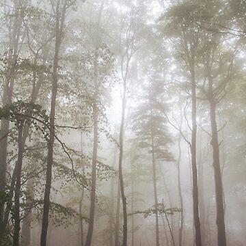Autumn's Fog by domcia