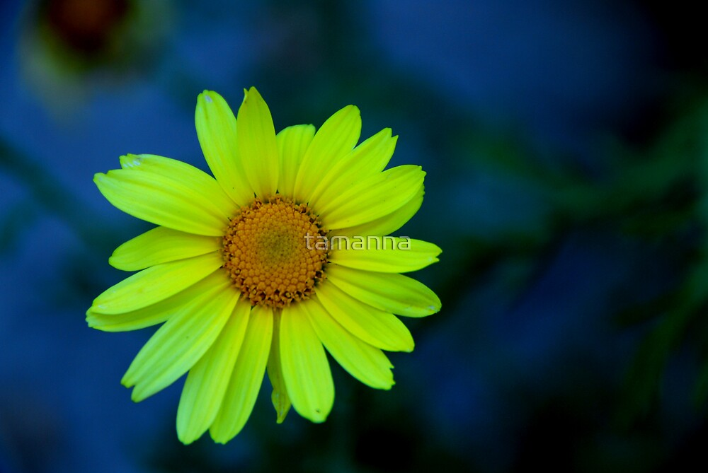 One Flower by tamanna