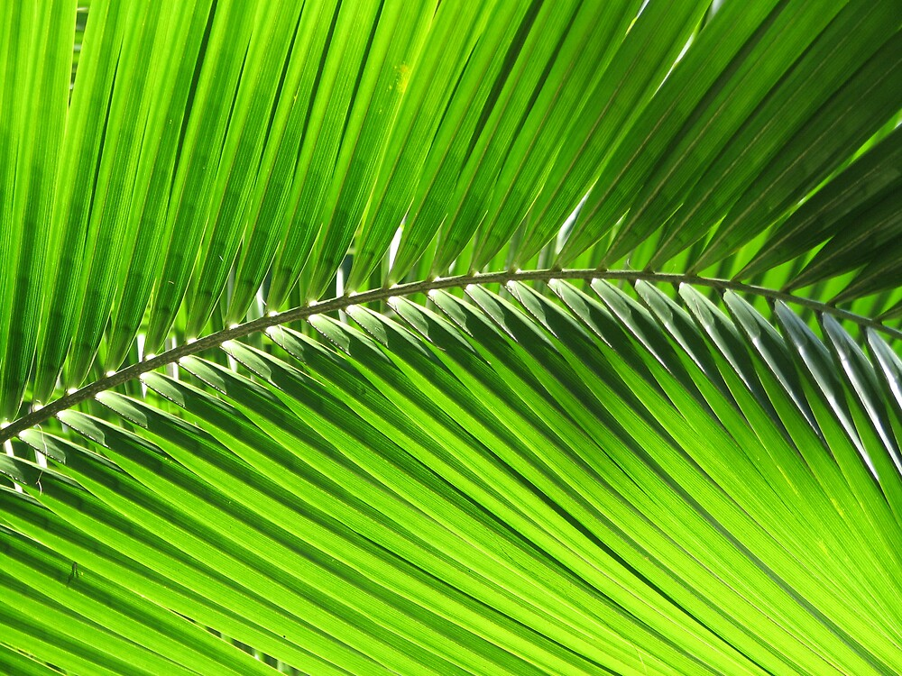 Palm Frond by Anne-Louise >>>