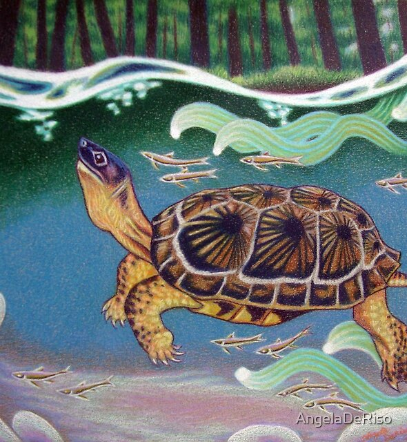Wood Turtle Color Pencil Artwork by AngelaDeRiso
