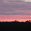 Pink and Purple Sunset Over Trees by silverdragon