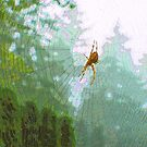 Art of the Spider Nature by Melissa J Barrett