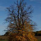 Autumn colours by Ann Heffron