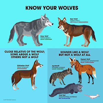 Know Your Wolves by PepomintNarwhal