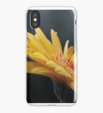 Macro photo of Gerbera flower. iPhone Case/Skin